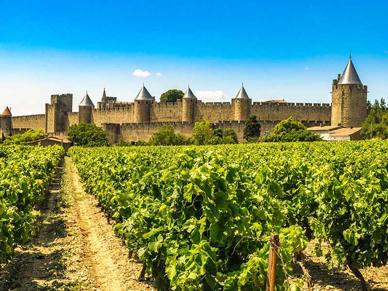 Vue sur les vignes et les remparts de Carcassonne en été