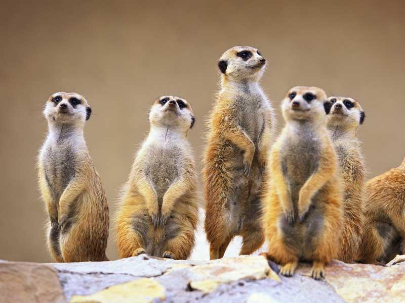 Animaux au zoo en colonie de vacances à l'océan cet été