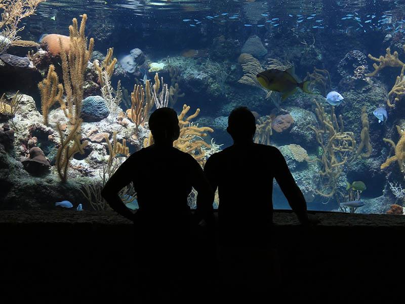 Des adolescents en train de regarder des poissons dans un Aquarium de Bretagne
