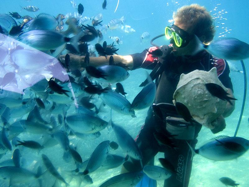 Un adolescent en colonie de vacances entouré de poisson devant une activité plongée sous-marine