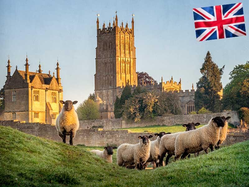 Château d'Angleterre et ses moutons en été