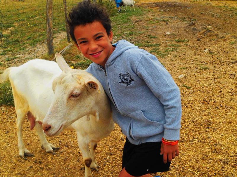 enfant avec les animaux de la ferme cet été en colo