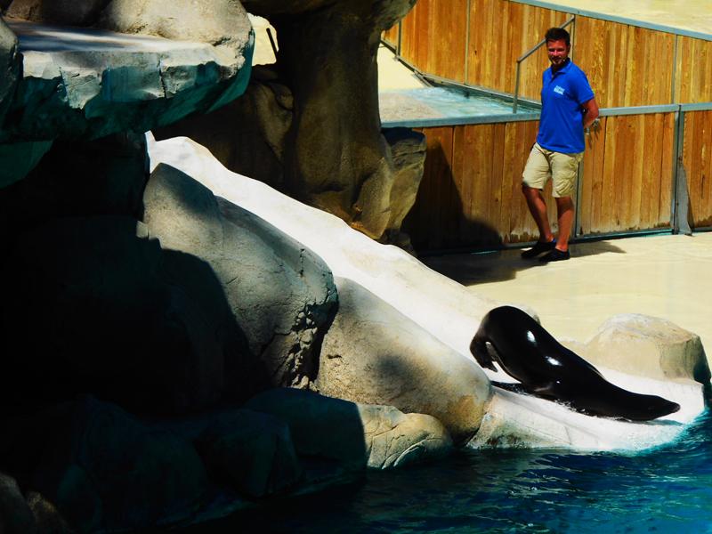 animaux aquatiques du zooparc de beauval pendant les colonies de vacances