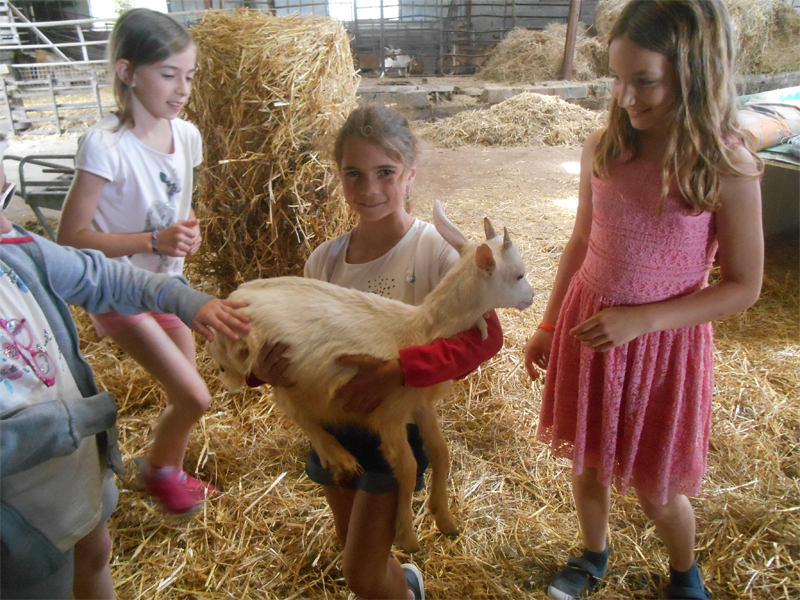 Jeunes enfants avec les animaux de la ferme en colonie de vacances