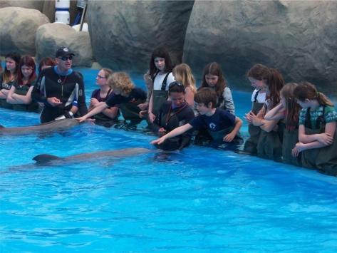 Colonie de vacances nager avec les dauphins