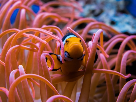 Colonie de vacances visite d'aquarium animaux marins