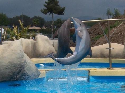 Danse des dauphins à Marineland