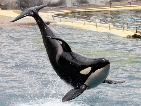 Colonie de vacances à Marineland danse des orques