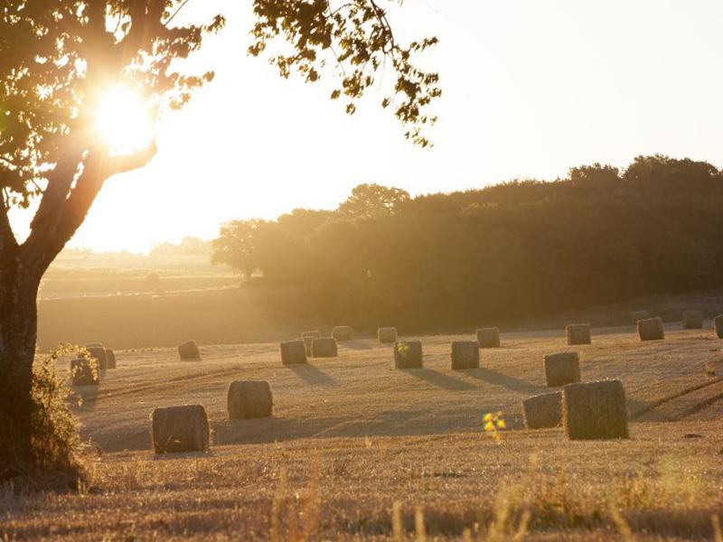 champs et rouleaux de paille cet été en colonie de vacances équitation