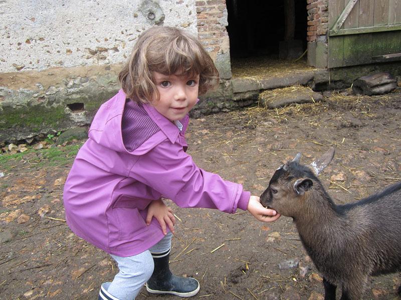 jeune fille s'occupant des animaux de la ferme en colonie de vacances cet été