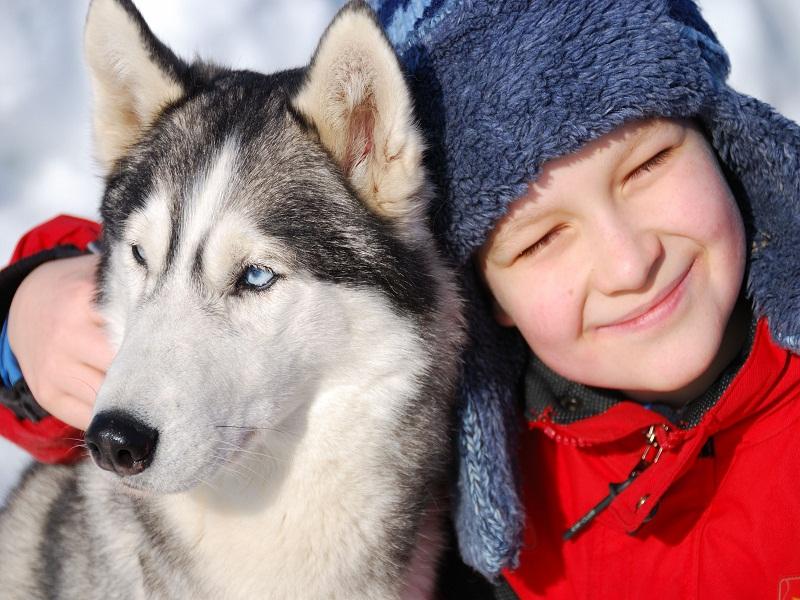 Portrait d'un enfant de 8 ans avec un chien de traineaux en colonie de vacances