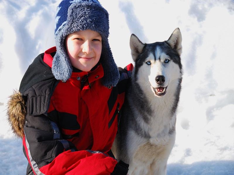 Portrait d'un enfant en colonie de vacances avec un chien de traineaux