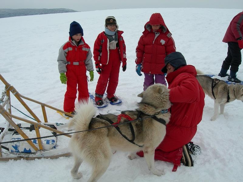 Enfant prenant soin du chien de traineau en colo