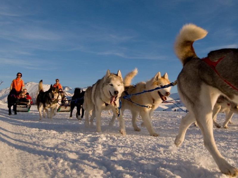 Balade en chiens de traineaux à la montagne en colonie de vacances