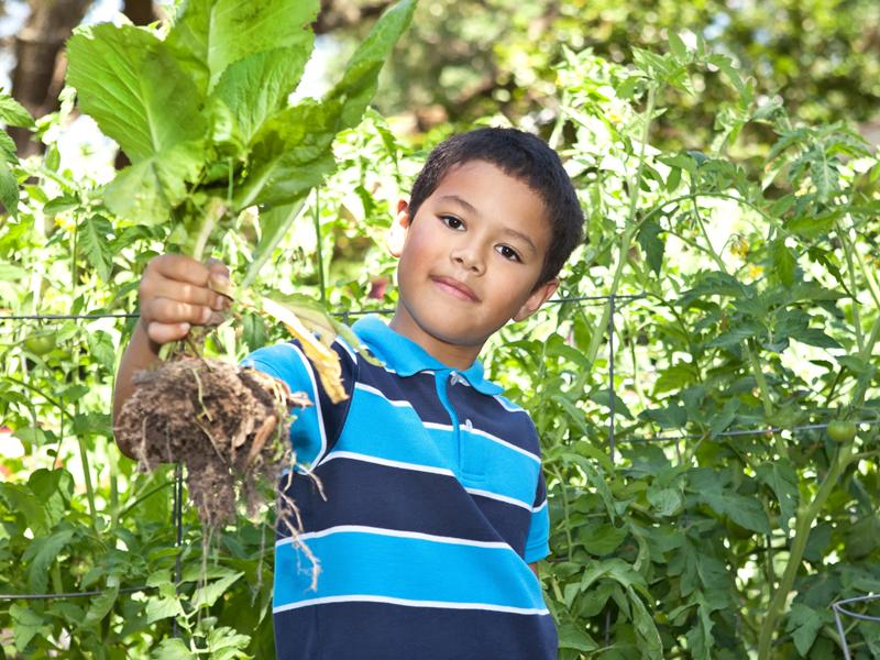 Enfant faisant la récolte de légumes dans le jardin