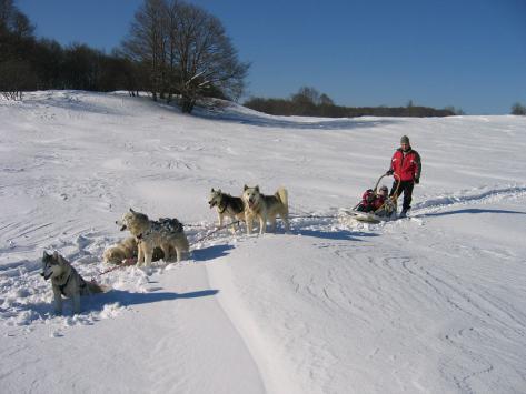 Colonie chiens de traîneaux