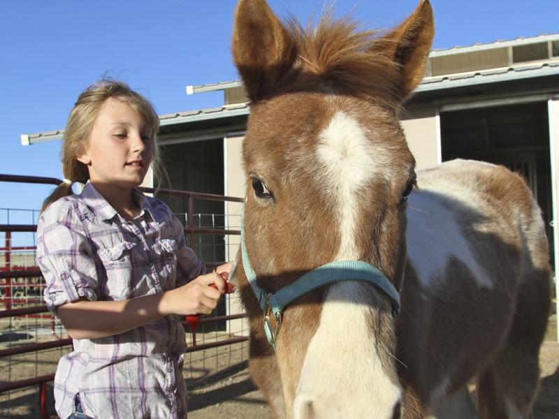 Fillette s'occupant d'un cheval en colonie de vacances