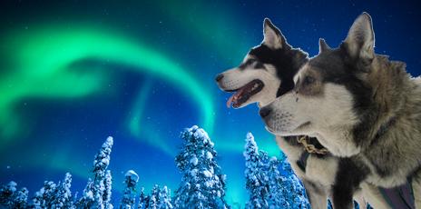 Grand Nord Lapon (Finlande)