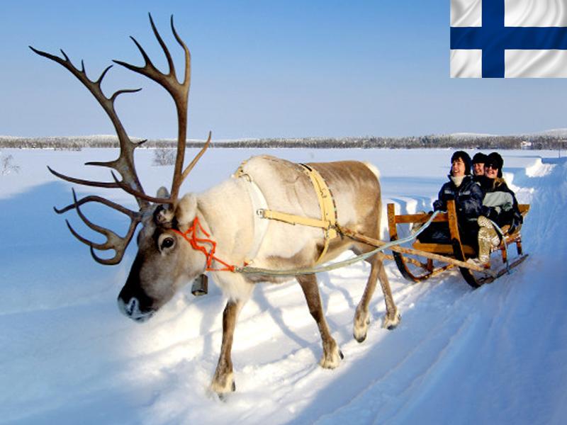 Promenade en traîneaux à rennes en colonie de vacances en Laponie