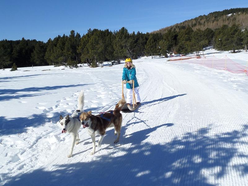Enfant en balade en chien de traineaux en colonie de vacances d'hiver