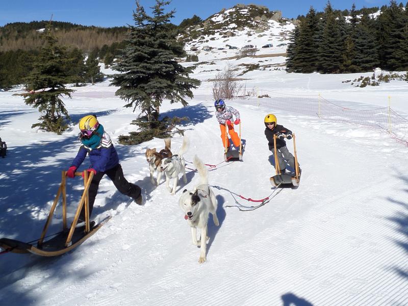 Groupe d'enfants en colonie de vacances sur les pistes en balade en chien de traineaux
