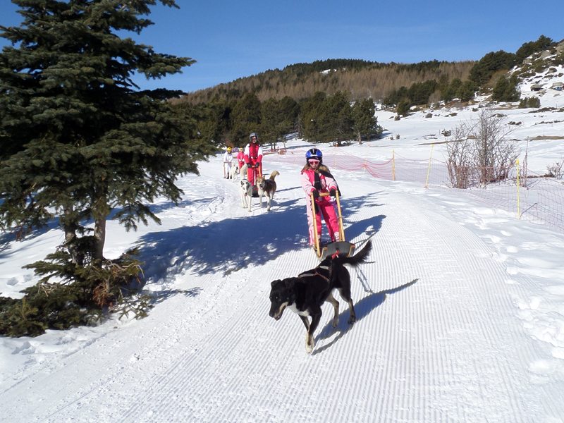 Groupe d'enfants en balade en chiens de traineaux en colonie de vacances de février