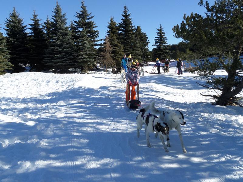Groupe d'enfants en balade en traineaux à la montagne en colonie de vacances