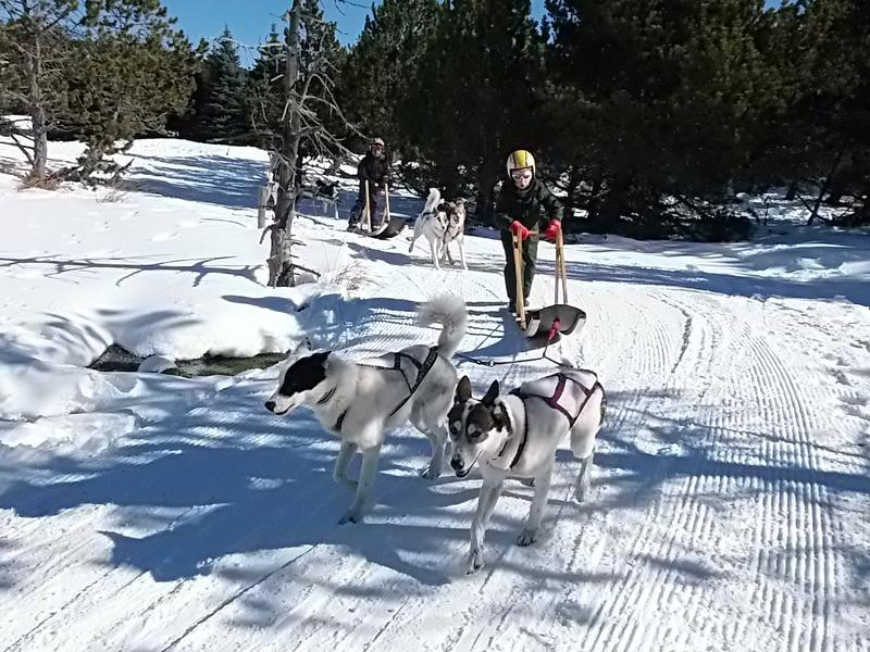 Enfant se baladant en traineaux à chiens en colonie de vacances