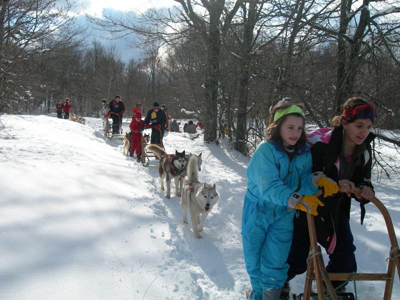 Groupe d'enfants en randonnée traîneaux avec des chiens