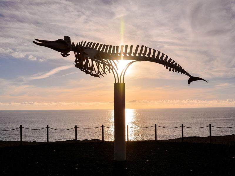 Squelette de la baleine au musée du sel à Fuerteventura en colonie de vacances