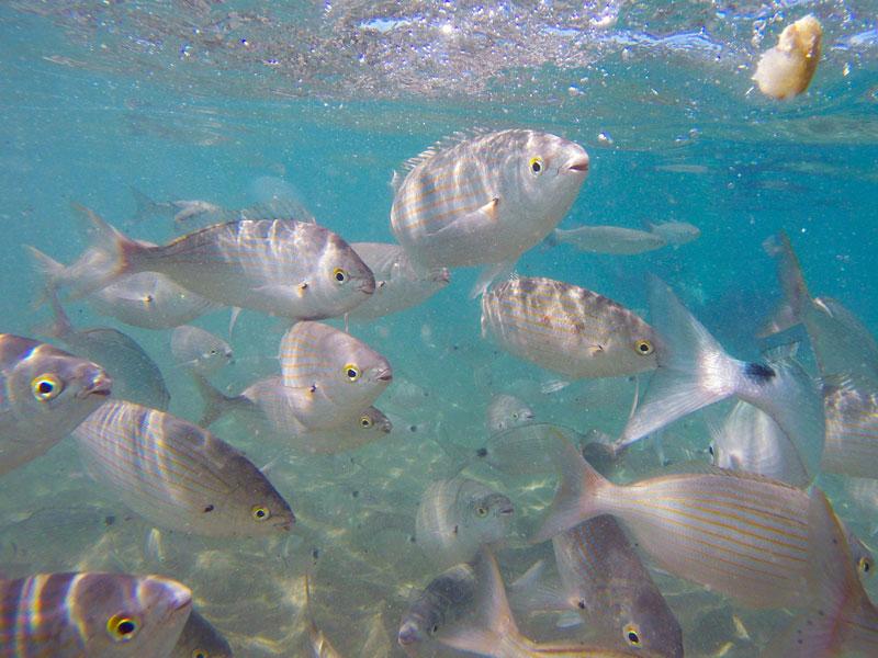 Snorkeling en Espagne en colonie de vacances