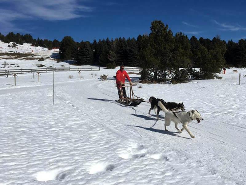 Moniteur de colo faisant du traineau à chiens cet hiver