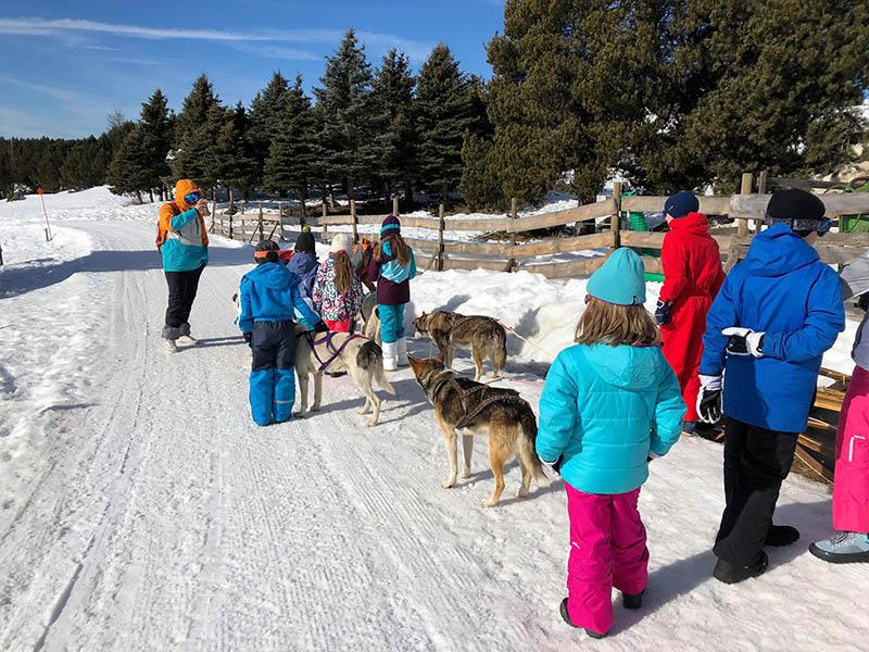 Enfants en balade en traineaux à chien cet hiver en colo