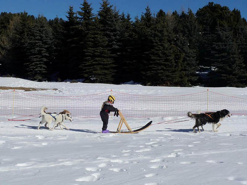 Enfants de 10 ans en train de faire une balade à chien de traineaux cet hiver en colo