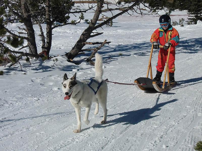 Enfant en balade avec un chien de traineau cet hiver en colonie de vacances