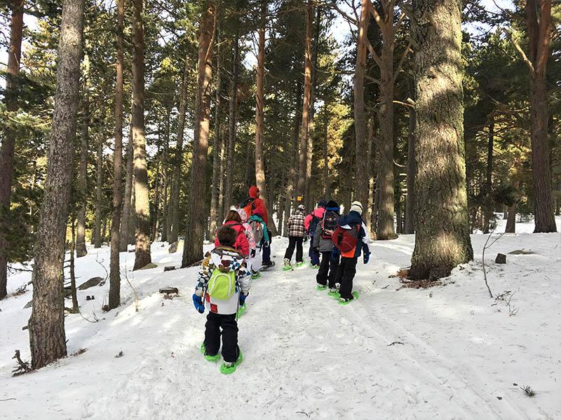 Enfants en balade à raquettes à neige dans les bois en colonie de vacances cet hiver