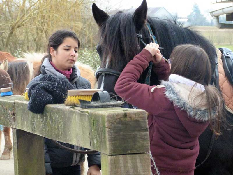Enfant apprenant à faire le pansage à cheval en colonie de vacances