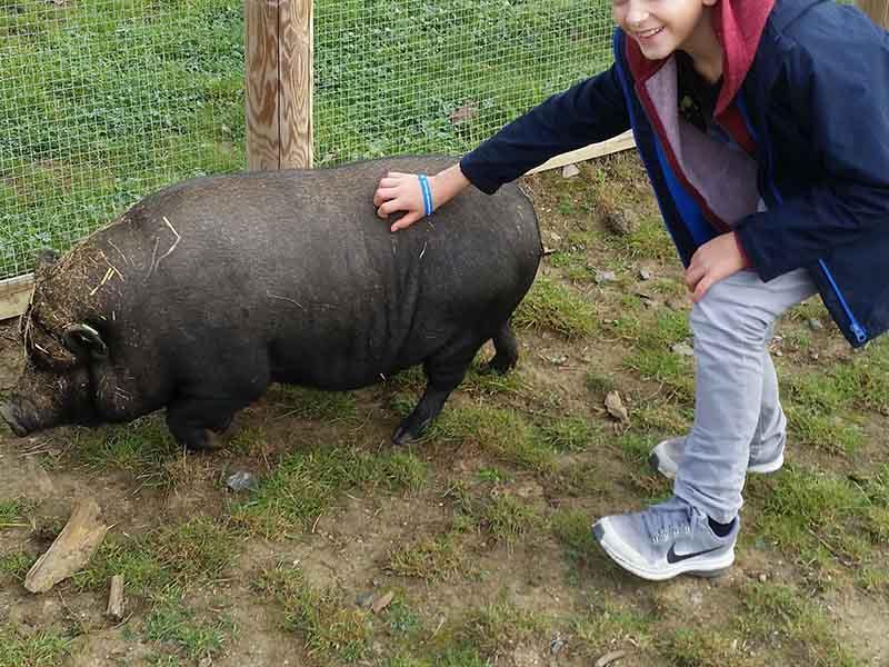 Enfant caressant un cochon en colonie de vacances d'hiver
