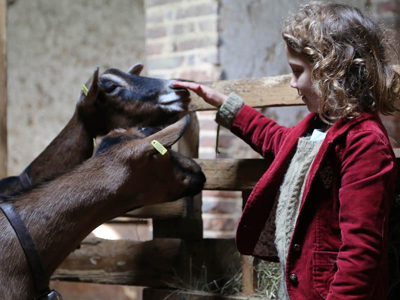 Fillette en train de caresser des animaux de la ferme en colo cet hiver