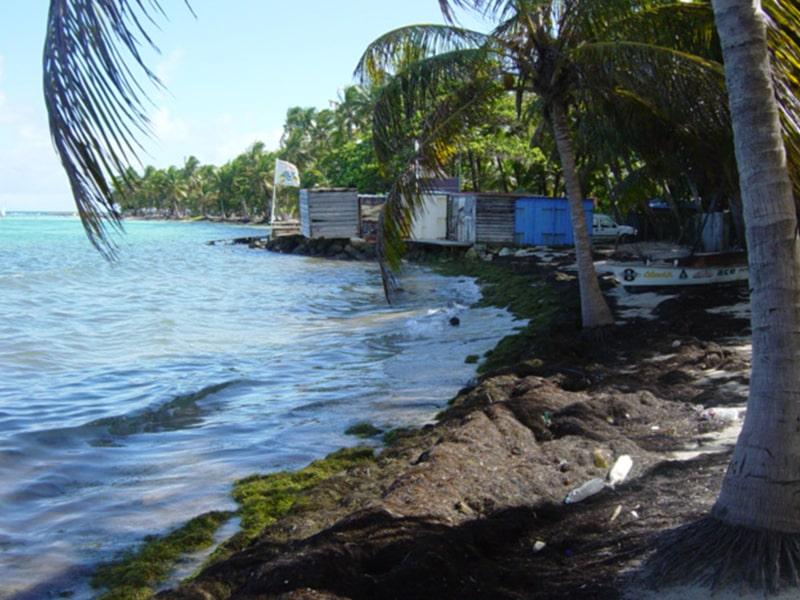 Vue sur le bord de plage proche d'un centre de colo de vacances en Guadeloupe
