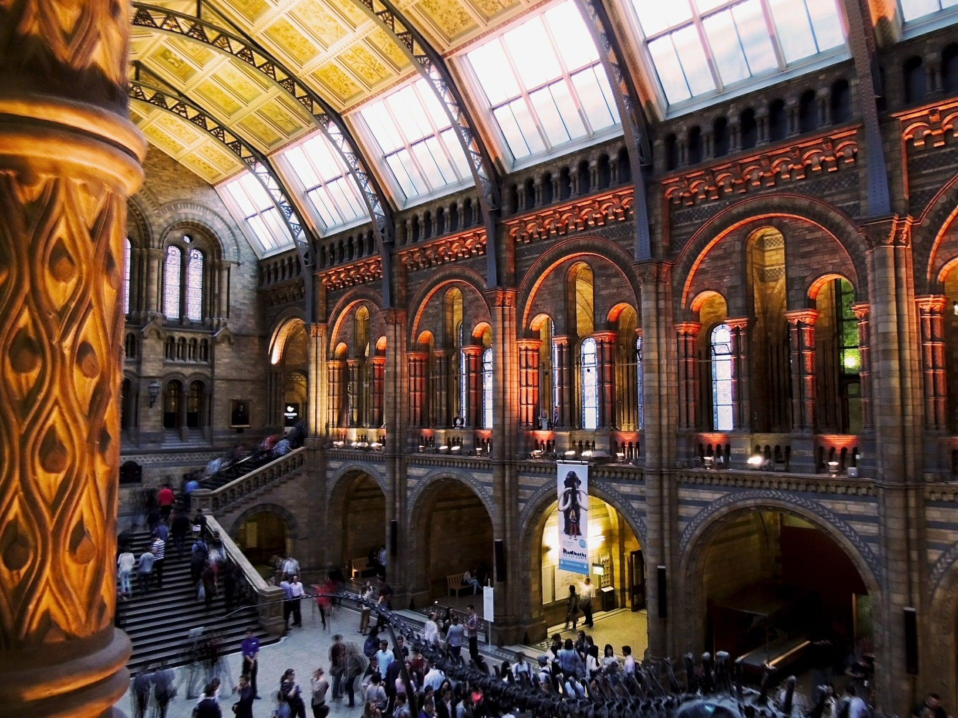 Musée d'histoire naturelle de Londres lors d'une colonie de vacances