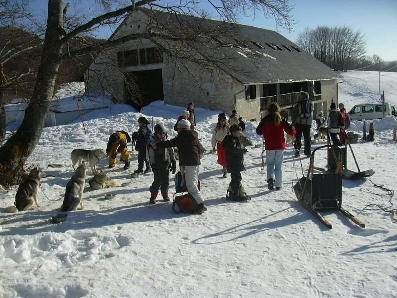 Groupe d'enfants et de chiens de traîneaux en colonie de vacances