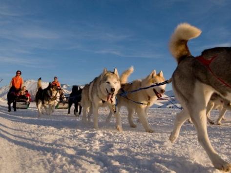 Colonie de vacances chiens de Traîneaux