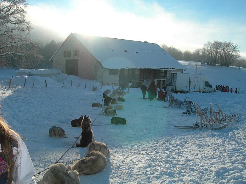 Vue sur le centre de colonie de vacances et les chiens de traîneaux