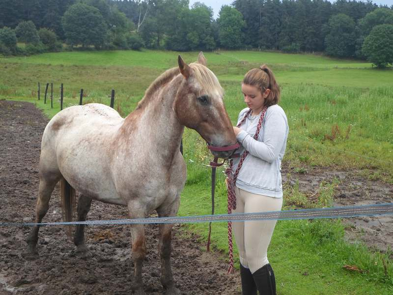 Jeune fille s'occupant de son cheval en colo