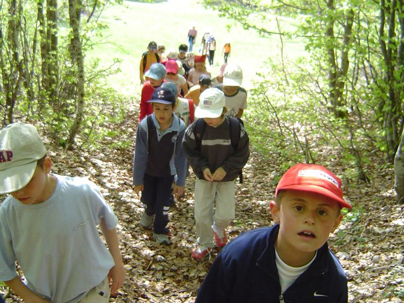 Groupe de jeunes enfants en randonnée dans les bois en colonie de vacances
