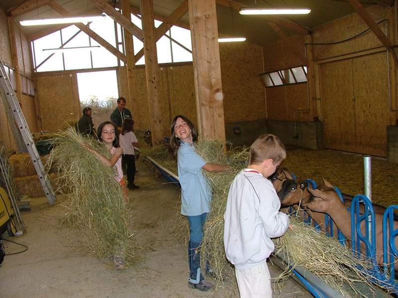 Enfants découvrant les animaux de la ferme en colonie de vacances