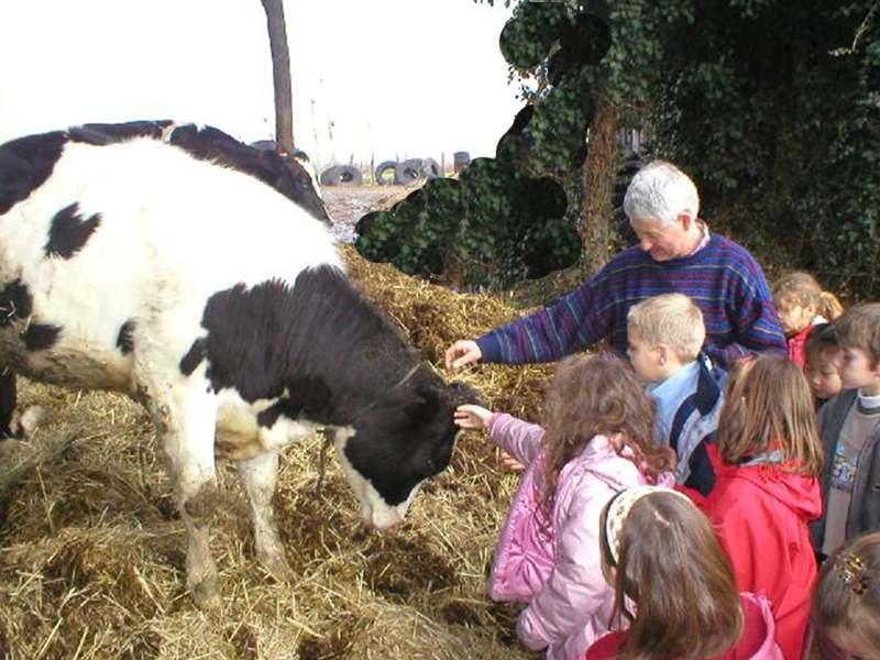 Enfants caressant une vache à la ferme