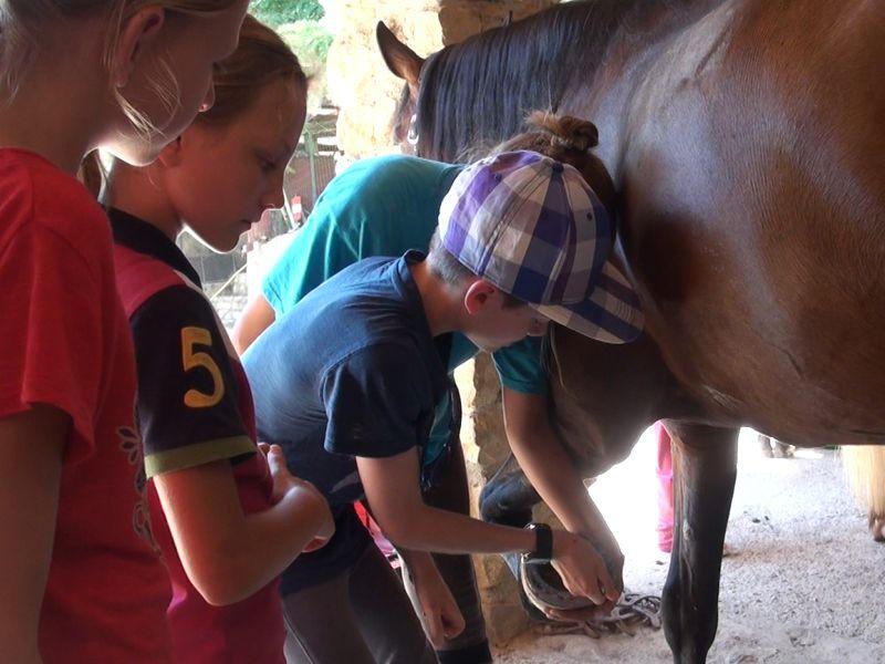 Un enfant apprend à nettoyer les fers d'un cheval
