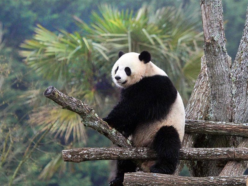 Colonie de vacances Panda enfants
